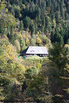 Vom Waldweg aus kann man bereits die Hütte durch die Bäume entdecken
