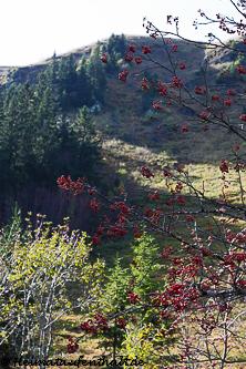 Von hier aus hat man einen tollen Blick hinauf auf den Feldberg