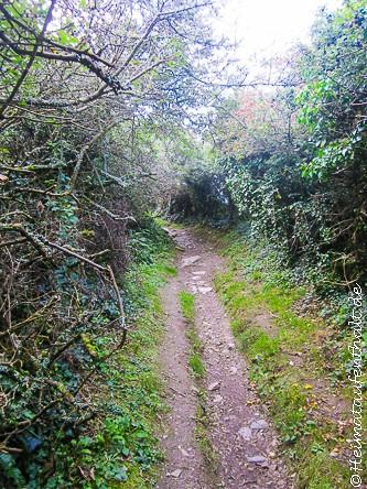 Fußweg vom Ort Tintagel in Richtung Küste