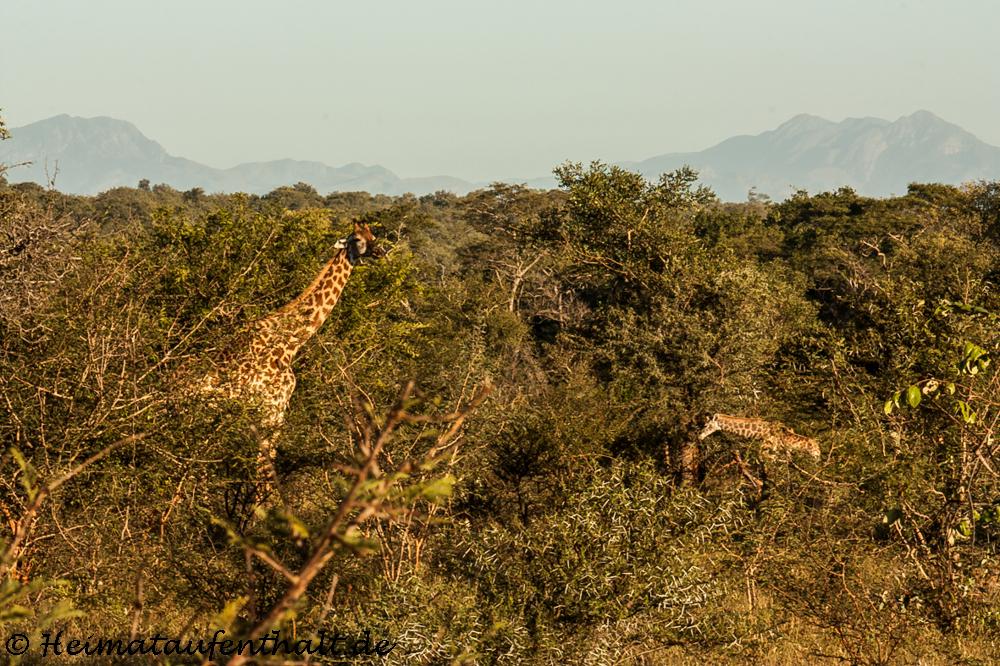 Safari Lodge Südafrika